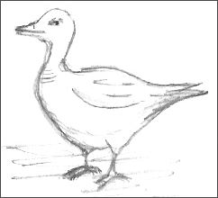 Repeated Duck Drawing