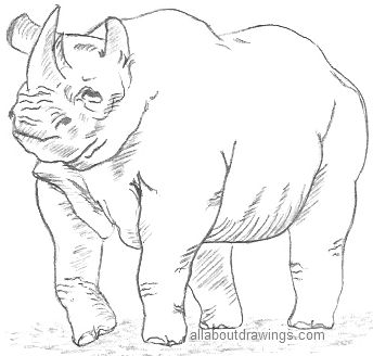 Rhinoceros Drawing