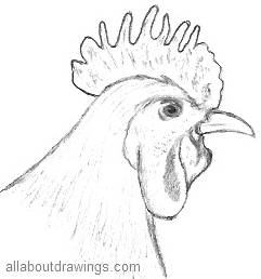 Drawing Of A Rooster Head