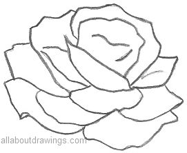 Rose Outline