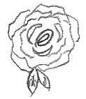 Rose Sketch Complete