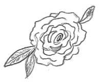 Rose Sketched