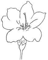 Simple Flower Drawing