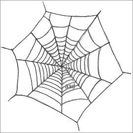 Spider in web drawing - photo#16