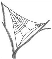 Spider Web In A Tree Drawing
