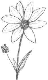 Easy Drawings Of Flowers In Pencil Sunflower Drawing