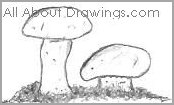 Table Mushroom Drawings