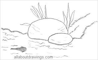 Tadpole Drawing