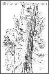 Landscape Tree Portion