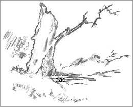 Tree Trunk Sketch