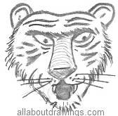 Angry Cartoon Tiger Drawing