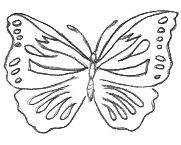 Butterfly Template Drawing