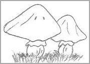 Cartoon Mushroom Drawing