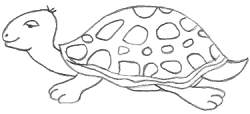 Cartoon Turtle Drawing