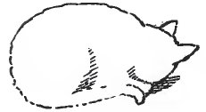 Cat Drawing From Memory