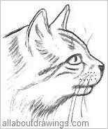 Cat Face Drawing
