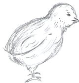 My Chick Drawing