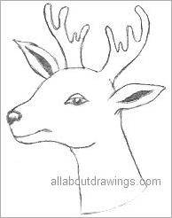 christmas reindeer drawing - Christmas Drawings Step By Step