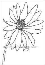 Daisy Outline Drawing