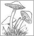 Fairy Mushroom Drawings