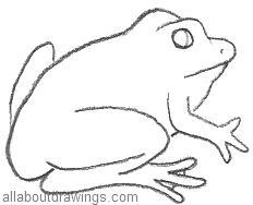 Frog Drawings In Pencil