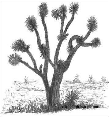 Joshua Tree Sketch