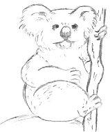Koala Drawing