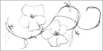 Left Handed Flower Sketch