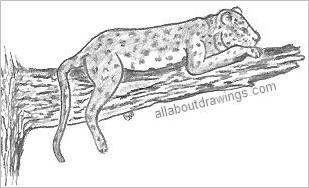 Leopard Drawing