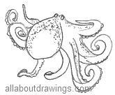 Octopus Drawings