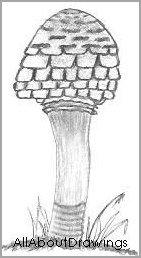 Open Parasol Mushroom Drawing