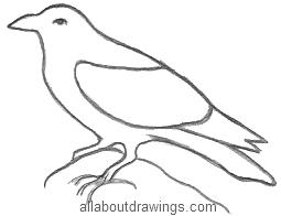 Raven Drawing Outline
