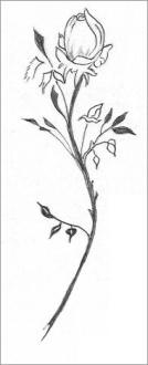 Drawing of a Single Rose