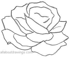 Beautiful Rose Pencil Drawings
