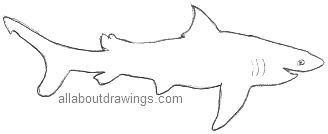 Shark Outline