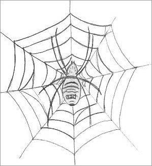 Spider In A Web Drawing