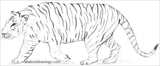 Tiger Outline