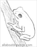 Tree Frog Drawings