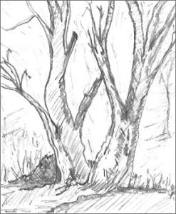 Drawing a Tree