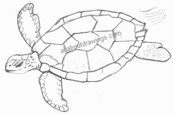 how to draw a hawaiian turtle