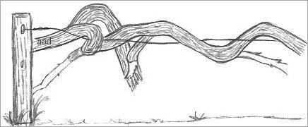 Vine Drawings