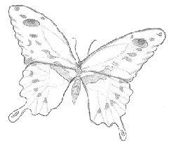 Mel Stampz: 60+ Butterflies (printed on vellum & cardstock ...